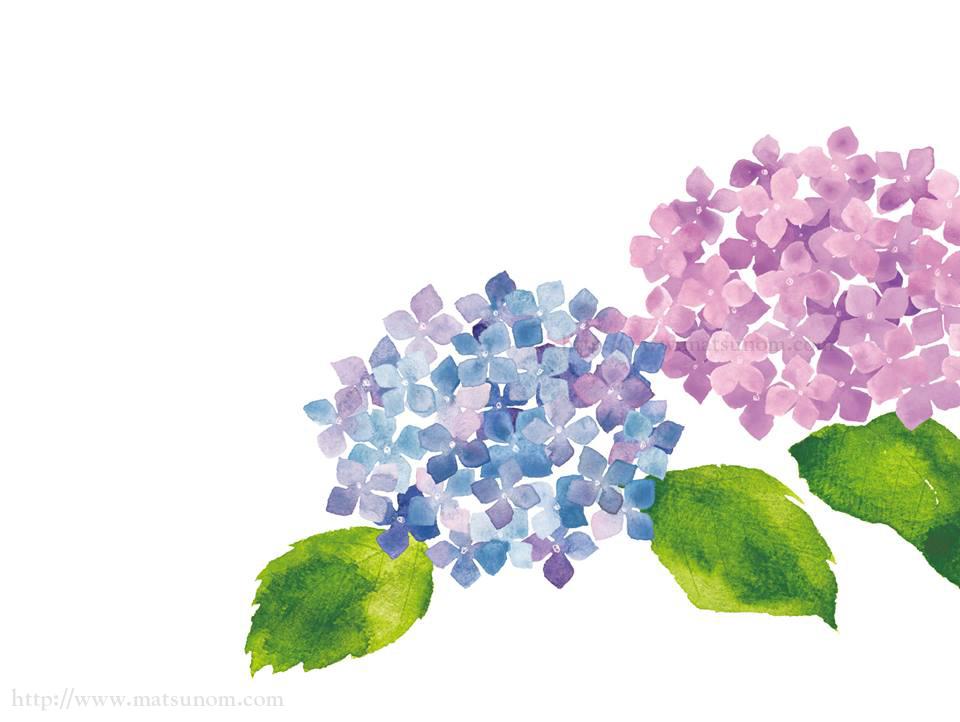 月刊誌に掲載された植物画(画像8点)